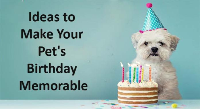 Ideas to Make Your Pet's Birthday Memorable